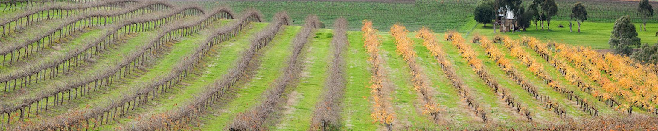Barossa-Infrastructure-Landscape-2